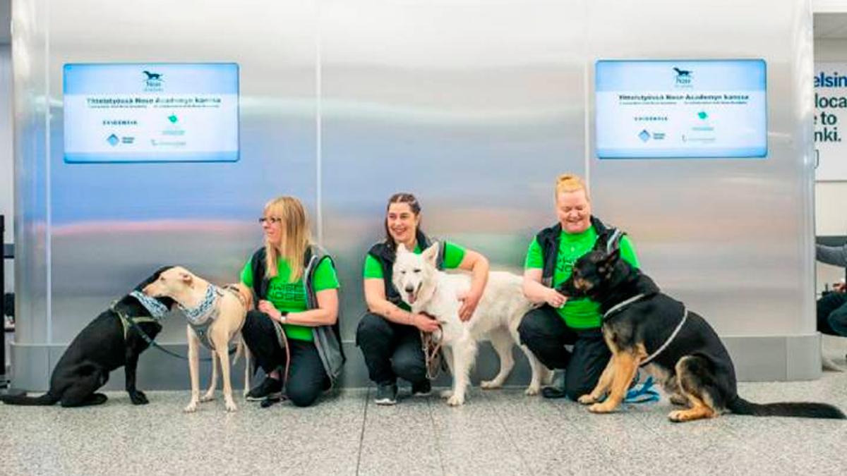 Finlandia usa perros para detectar la COVID-19 en aeropuerto