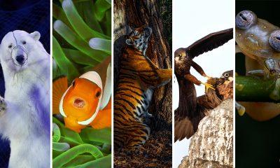 Las mejores fotografías de Vida Salvaje y ganadoras de Wildlife Photographer of the Year 2020