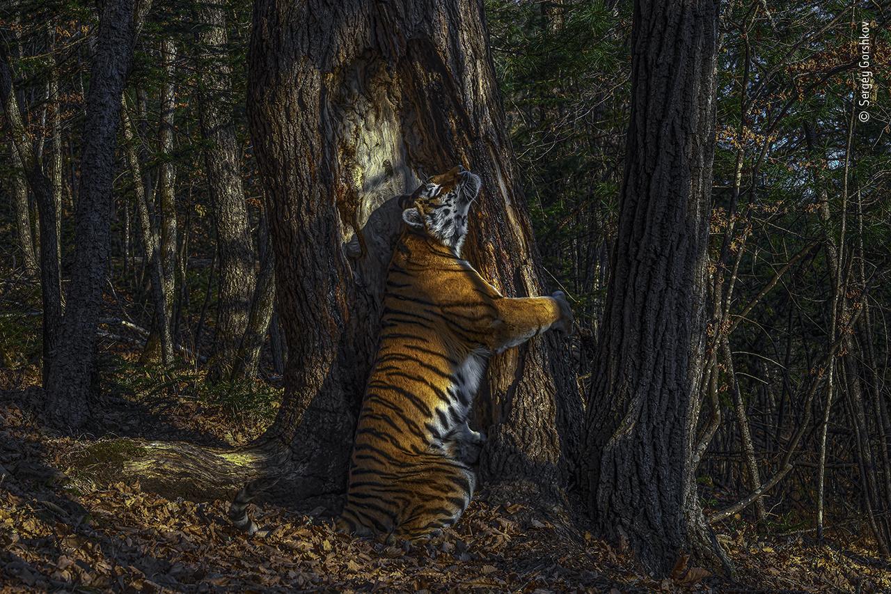 las mejores fotografias de vida salvaje1