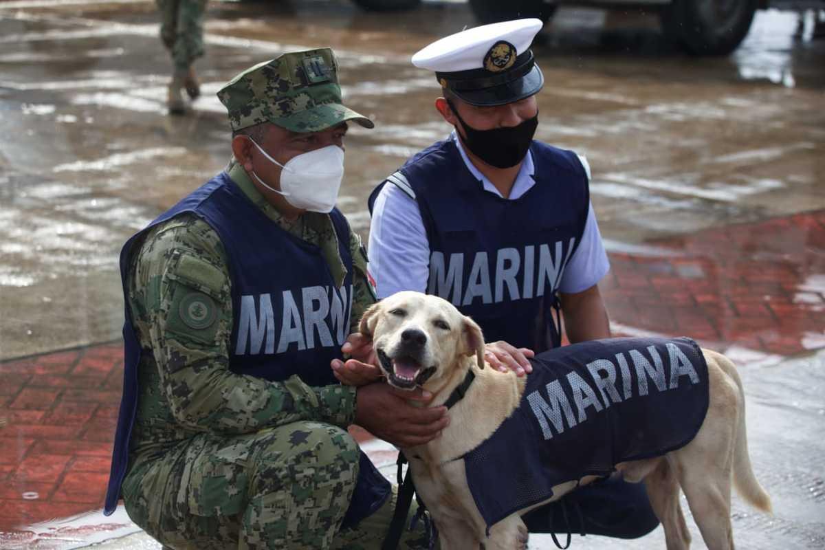 perrito rescatado en inundaciones ya es todo un marino